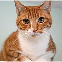 Adopt A Pet :: Hix - Milford, MA