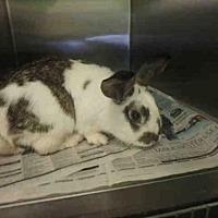 Adopt A Pet :: A1668626 - Los Angeles, CA