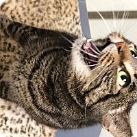 Adopt A Pet :: Bubbles - Casa Grande, AZ