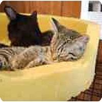 Adopt A Pet :: Paco - Grand Rapids, MI