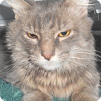 Adopt A Pet :: Gulliver - Chattanooga, TN