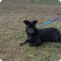 Adopt A Pet :: Kelly - Oviedo, FL