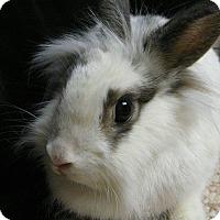 Adopt A Pet :: Moxie - Newport, DE