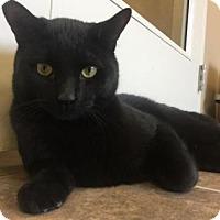 Adopt A Pet :: Yassop - Cumming, GA