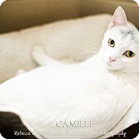 Adopt A Pet :: Camille - Appleton, WI