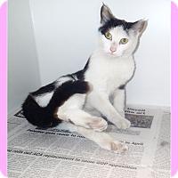 Adopt A Pet :: Calyn - Newport, NC