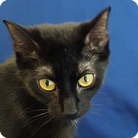 Adopt A Pet :: Mistique - Hawk Point, MO