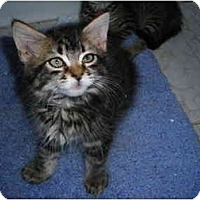 Adopt A Pet :: Manhattan & Company - Riverside, RI