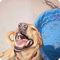 Adopt A Pet :: Annie - Wallaceburg, ON