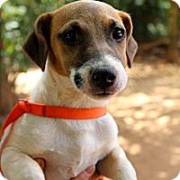 Adopt A Pet :: DeNero - hartford, CT