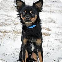 Adopt A Pet :: Eddie - Cheyenne, WY