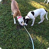 Adopt A Pet :: Elsie - Williston, FL