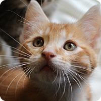 Adopt A Pet :: Doran - North Highlands, CA