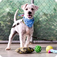 Adopt A Pet :: Crumpet - Calgary, AB