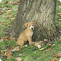 Adopt A Pet :: Bella Boo (BB) - Byhalia, MS