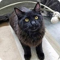 Adopt A Pet :: Olin - Mountain Center, CA