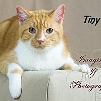 Adopt A Pet :: Tiny - Oklahoma City, OK