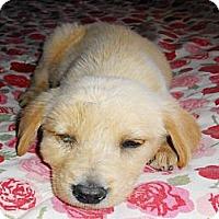 Adopt A Pet :: Arthur - San Diego, CA