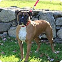Adopt A Pet :: Fatboy - Grafton, MA