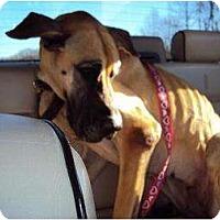 Adopt A Pet :: Nala - Oak Ridge, TN