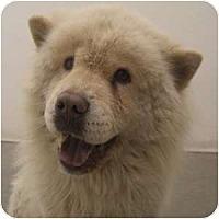 Adopt A Pet :: Vivienne - Phoenix, AZ