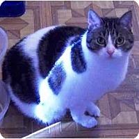 Adopt A Pet :: Zoe - Summerville, SC