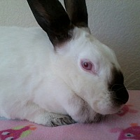 Adopt A Pet :: Twilight - Watauga, TX