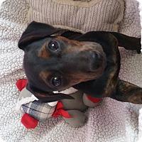 Adopt A Pet :: Toto - Homewood, AL