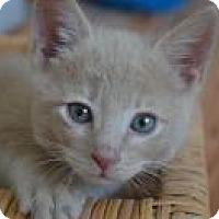 Adopt A Pet :: Gino - Mission Viejo, CA