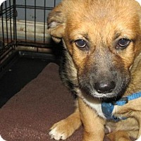 Adopt A Pet :: Stafford - Rocky Mount, NC