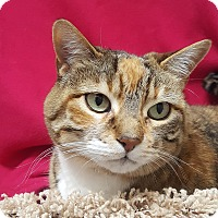 Adopt A Pet :: Punkin - Colorado Springs, CO
