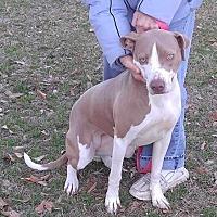 Adopt A Pet :: Goldie - Goldsboro, NC