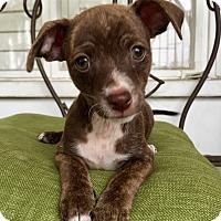 Adopt A Pet :: Benjamin (BH) - Santa Ana, CA