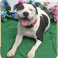 Adopt A Pet :: SOCHIL - Marietta, GA