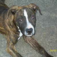 Adopt A Pet :: Lola - Mexia, TX