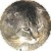 Scottish Fold Cat for adoption in Quilcene, Washington - Dozer