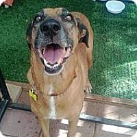 Adopt A Pet :: Tatum - Bergheim, TX