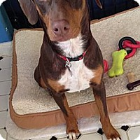 Adopt A Pet :: Dora - Kingwood, TX