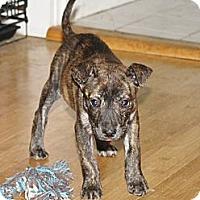 Adopt A Pet :: Pepper - Nashville, TN