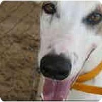 Adopt A Pet :: Moby - St Petersburg, FL