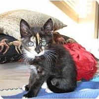 Adopt A Pet :: Mittens - Modesto, CA