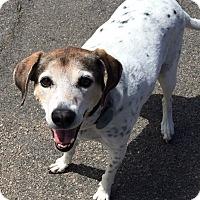 Adopt A Pet :: Libby - Grafton, MA