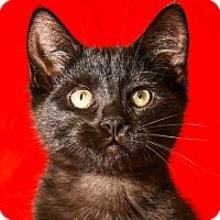 Adopt A Pet :: Samus - Athens, GA