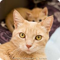 Adopt A Pet :: Fridley - Fountain Hills, AZ