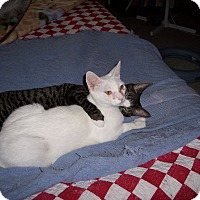 Adopt A Pet :: Casper - Richmond, VA