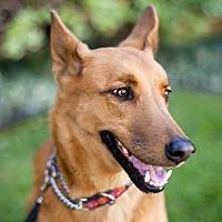 Adopt A Pet :: Don Don - Marina del Rey, CA