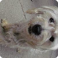 Adopt A Pet :: Tatty - Muskegon, MI