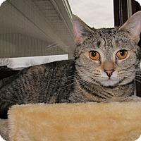 Adopt A Pet :: Taylor - Norwich, NY
