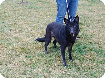 German Shepherd Dog Mix Dog for adoption in North Judson, Indiana - Mercy