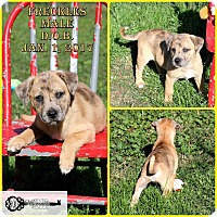 Adopt A Pet :: Freckles - DeForest, WI